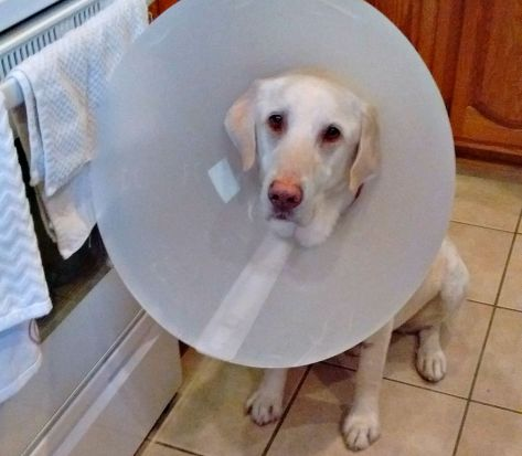 Gibson, who proved to be amazingly agile - nabbing food even with the cone