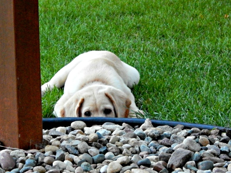 Chance - thinking about going in for a rock.